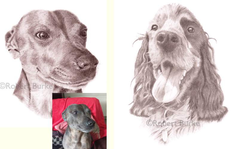 Pet  Portraits in Pencil