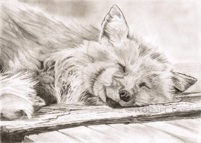 Sleeping Fox pencil portrait
