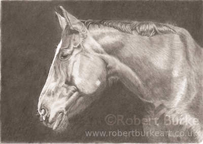 Pencil Portrate of  a Horse on a Black Background