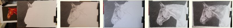 Work in Progress of Horse pencil portrait