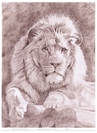 Lion on Logs Limited Edition Giclee Print