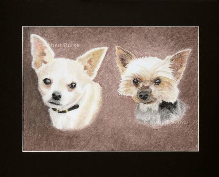 Chihuahua and Yorkie in soft pastels.