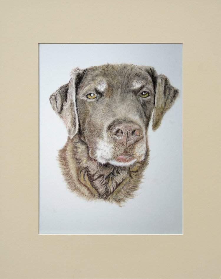 Pet Portrate in soft pastels