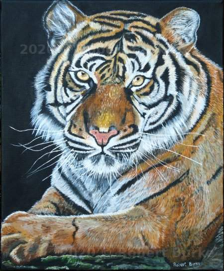 Tiger Portrait, Acrylic on Canvas by Robert Burke